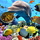 Aquarium Fish Live Wallpaper 2019