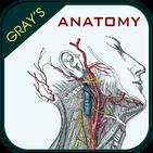 Gray's Anatomy - Anatomy Atlas 2020 APK